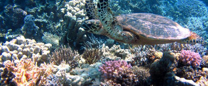 Unsere Meere (Schülerbeitrag)