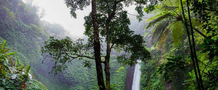 Der tropische Regenwald – Was geht mich das an? (Jakob)