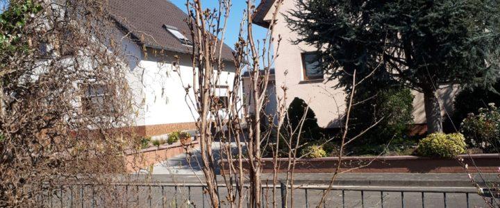 Gefragt: Wie viel Kohlenstoffdioxid hat dieser 5-jährige Baum bereits gespeichert? (Schülerfrage)